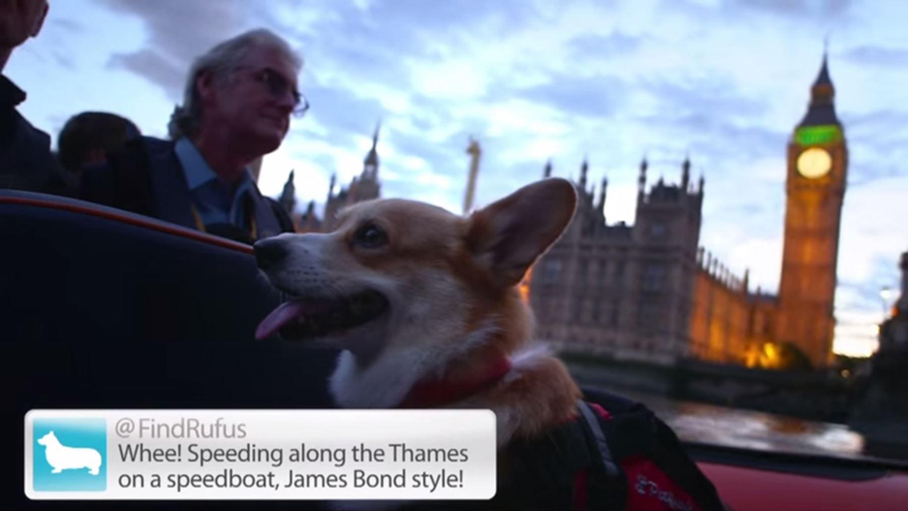 Dog Friendly London Experiences